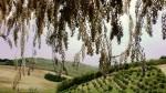 Вид с террасы Оливии весной