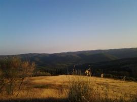 Lamole, Greve in Chianti