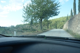 fox on the road near la casa